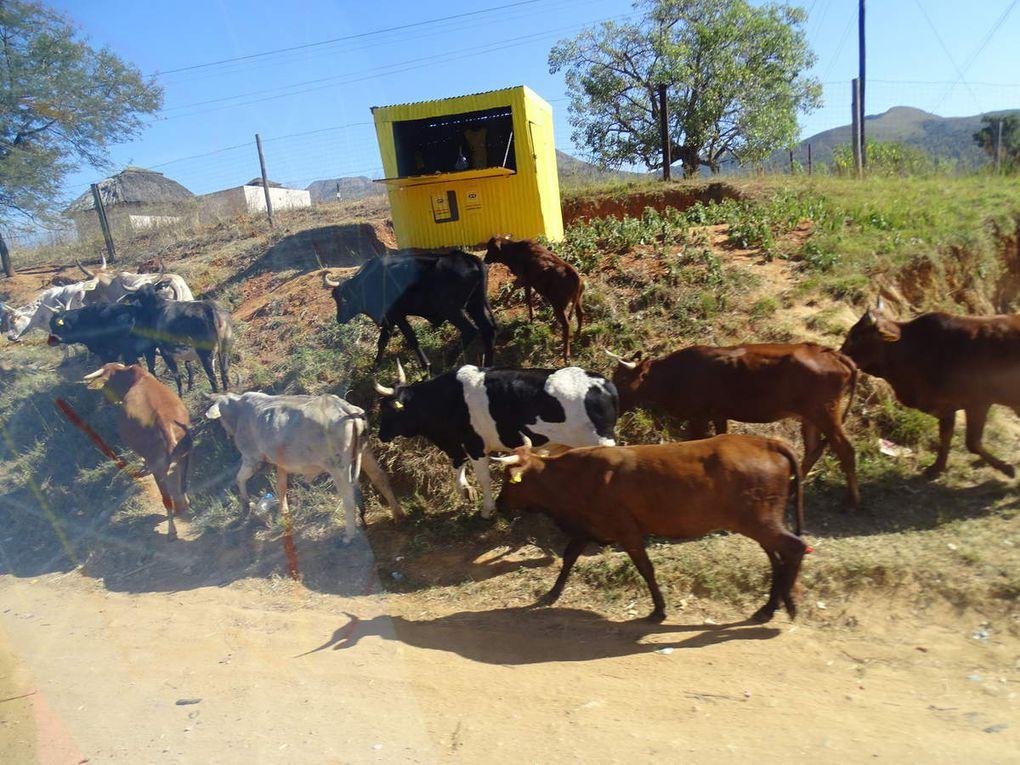 Jour 6 Traversée Swaziland