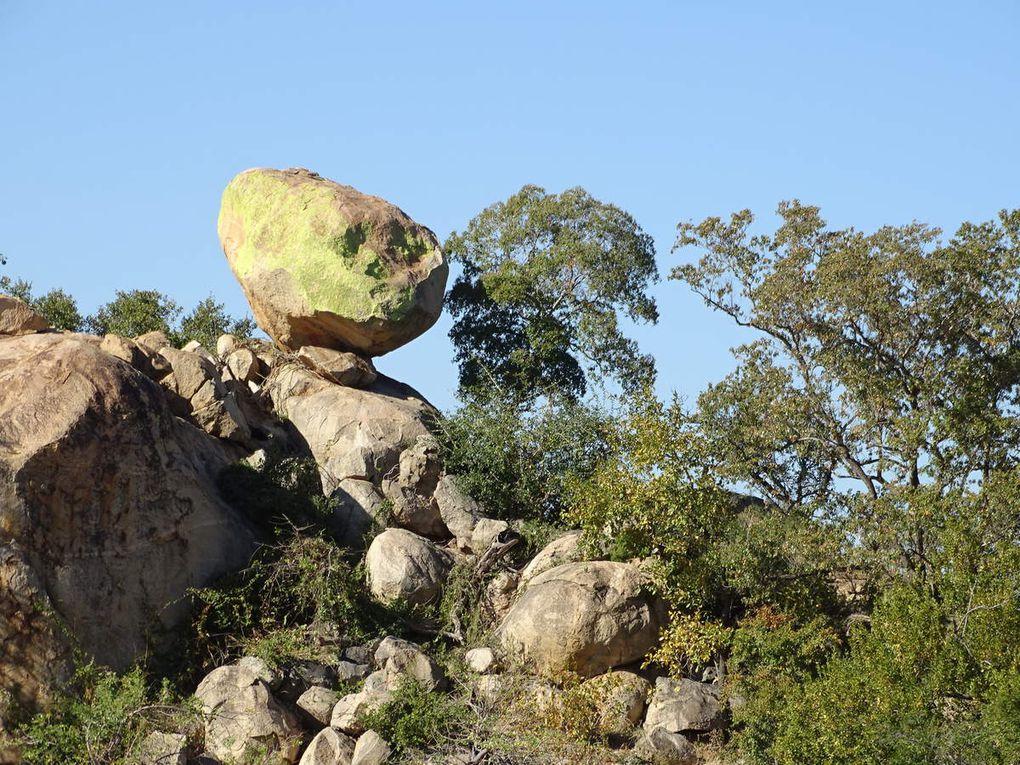 Jour 7 Safri Kruger Parc