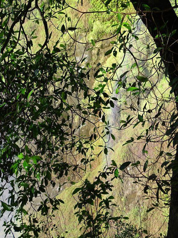 Jours 12: Victoria Falls et Safari Elephant