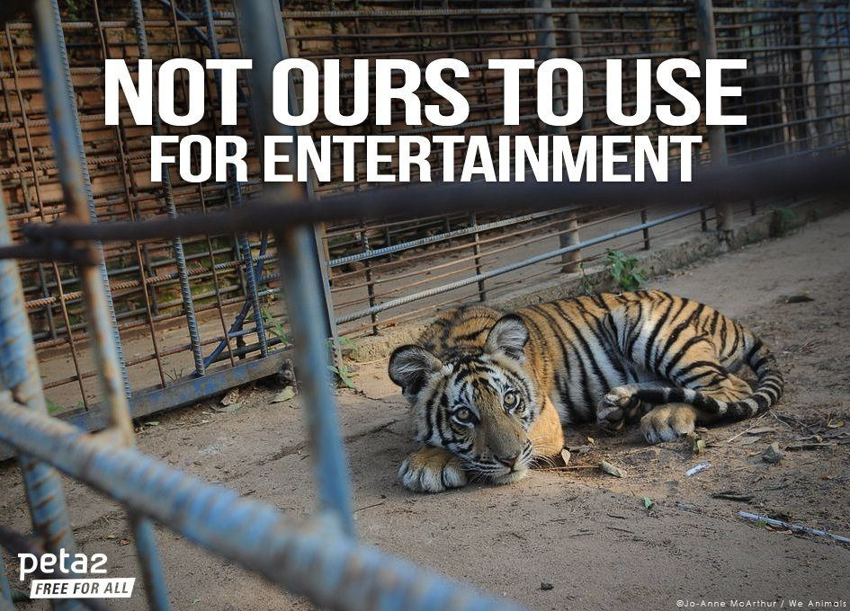 Using animals for entertainment essay