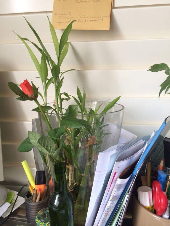 #Bermuda Onion, #rose d'amour, #cafedeladanse #bronzette sur le balcon #petit déj vitaminé #soleil #dramatique accident #le monde sportif en deuil