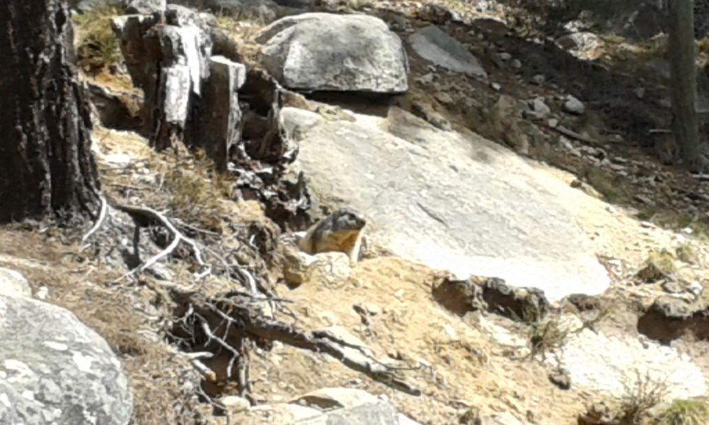 Visita del Parc Animaler dels Angles amb els amics de Lleida