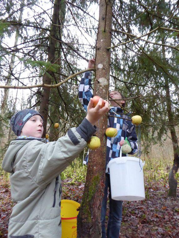 Mit Äpfeln, Karotten und Nüssen schmückten die Kinder bei einem Waldspaziergang die Bäume für die Tiere.