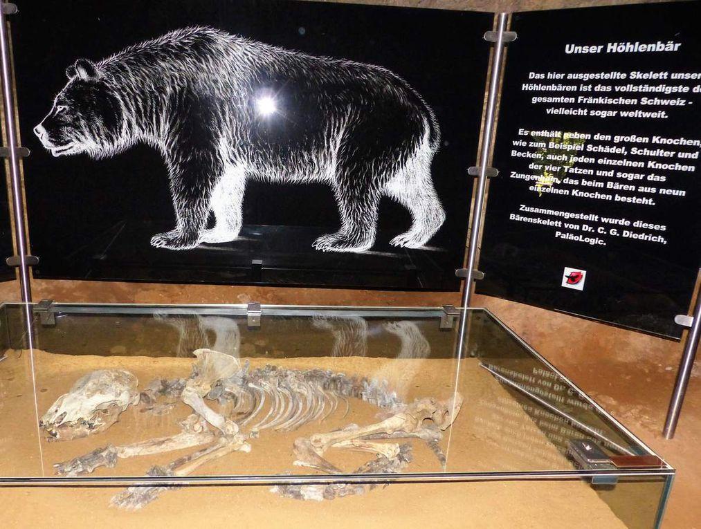 Im Vorhöhlenraum konnte eines der vollständigsten Höhlenbären-Skelette weltweit besichtigt werden, ebenso weitere Bären- und Raubtierknochen im Inneren der Höhle.