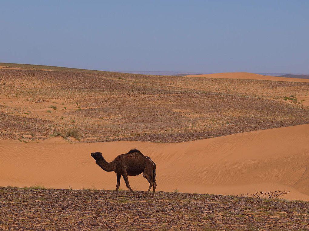Marco Olmo Desert Training 2016 (1^ ed.). Uno stage di formazione full immersion alla corsa di lunga durata nei deserti, nello scenario dell'erg Chebbi, in Marocco