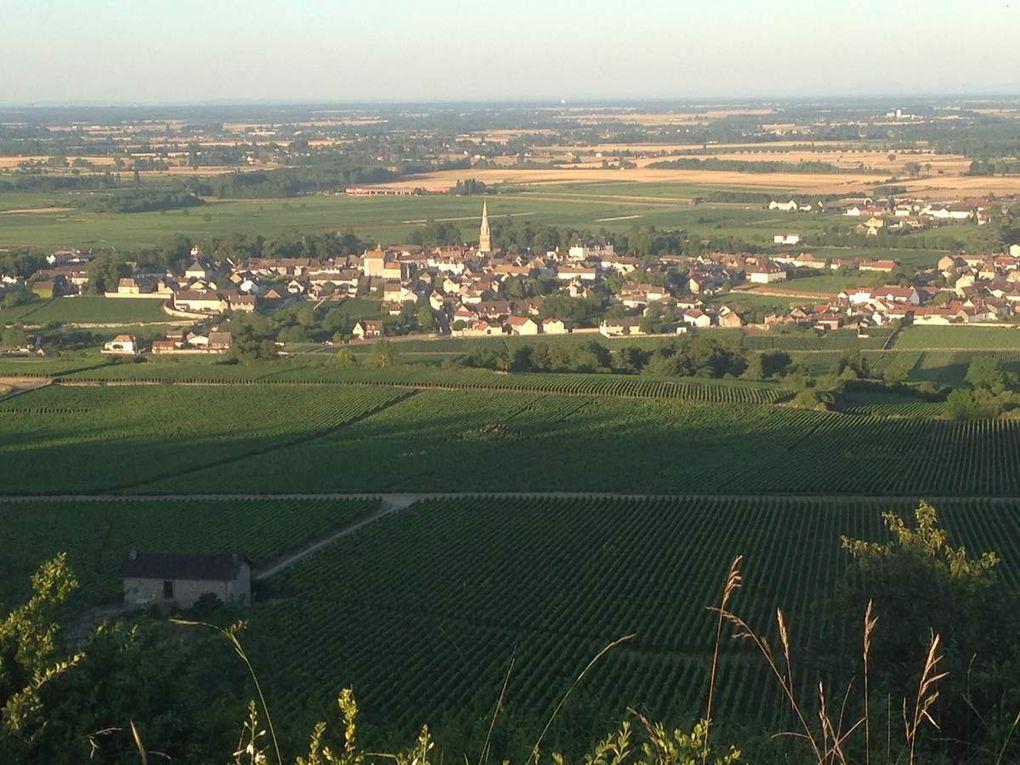 Comprendre les vins de Meursault - Partie 1: Les Meursault &quot&#x3B;Village&quot&#x3B;