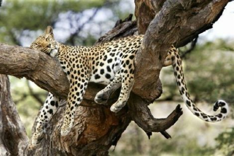 Grosse  fatigue  ou petite  sieste !
