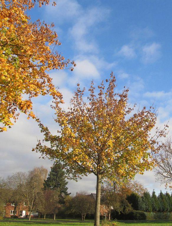 Bäume und Blattwerk