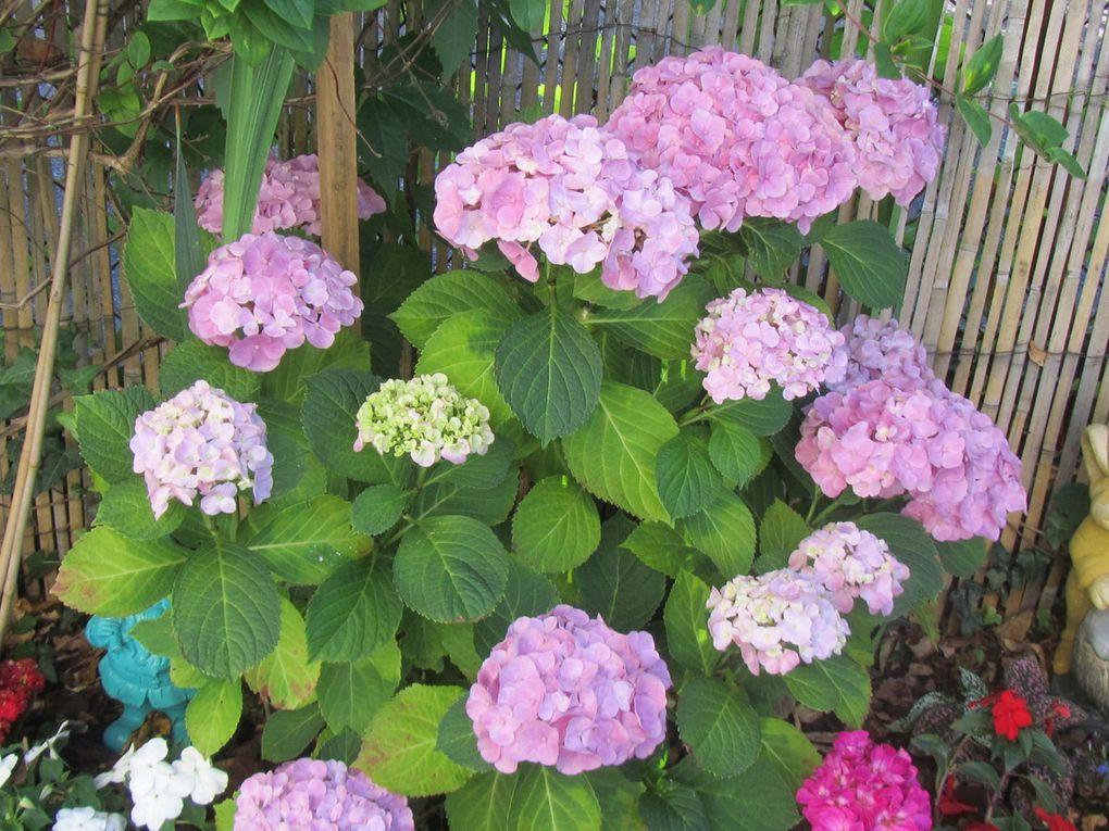 Des marie roses , des fushias , des kalanchoés , des plantes vertes ,de la lavande , des aghapentes,