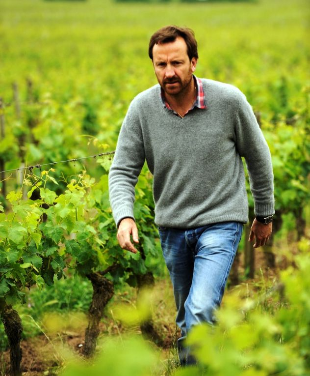 Domaine Thierry Germain  -  Domaine F. Chidaine
