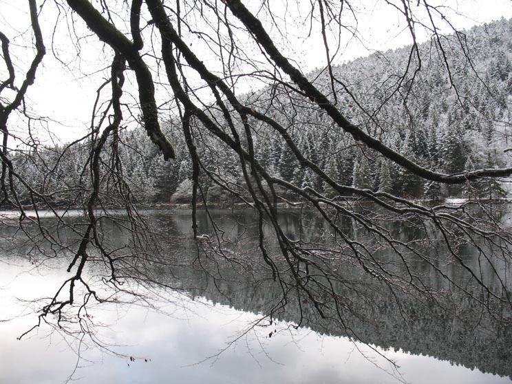 Les Vosges aux alentours de Gerardmer. 2/12/2009.