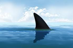 De la musique anti-requins
