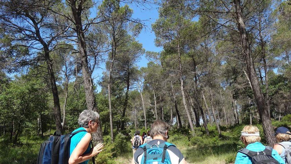 Rando dans les bois de Gréasque les Euves