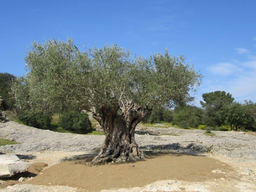 Séjour tonique dans le Gard, suite...