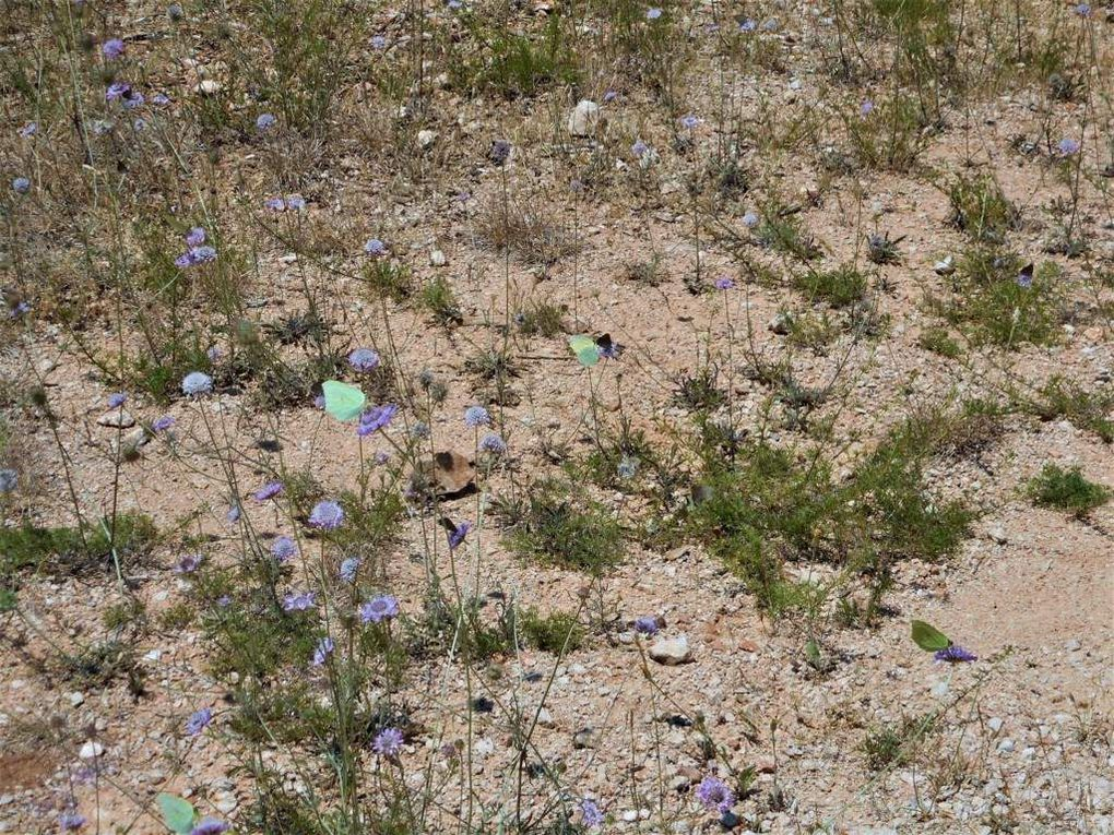 Rando du 19/06/2017 &quot&#x3B;Plateau de Siou Blanc, Aiguilles de Valbelle&quot&#x3B;