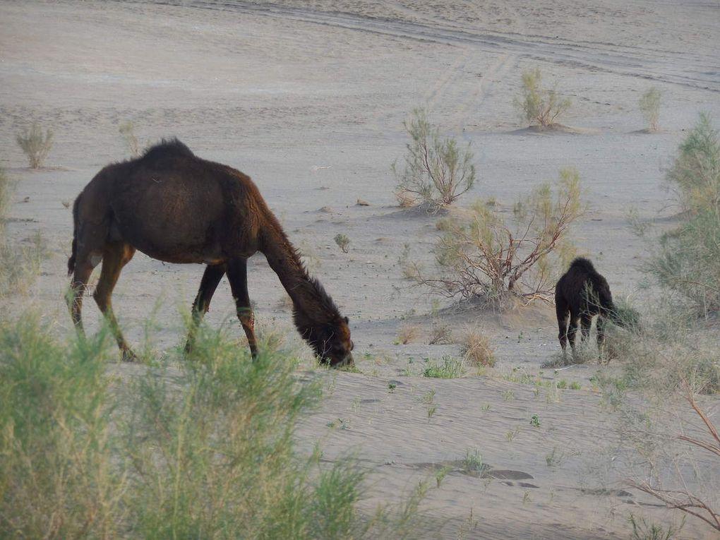 Dans le désert près du lodge chez l'habitant