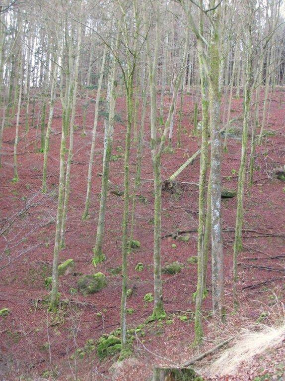Dans les Vosges
