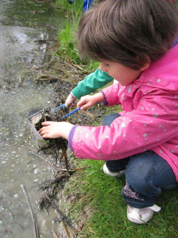 Découverte de la mare et pêche avec la classe d'Edith