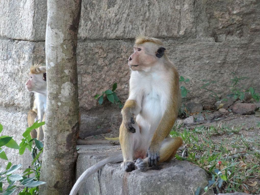 L'année du singe .....et.......