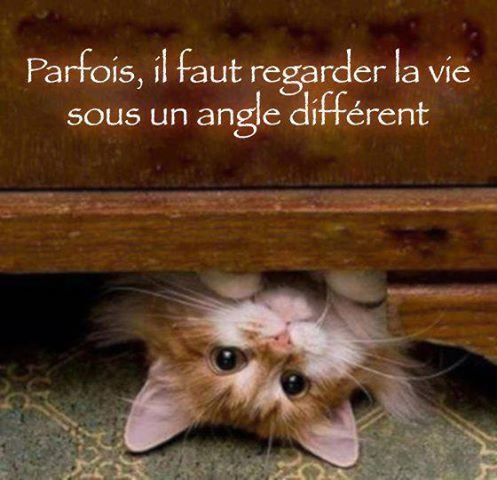Album - Chats alors!