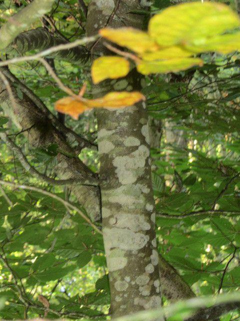 Nous avons fait des empreintes d'arbres avec de la pâte à modeler et des pastels. (Zoé et Marie)