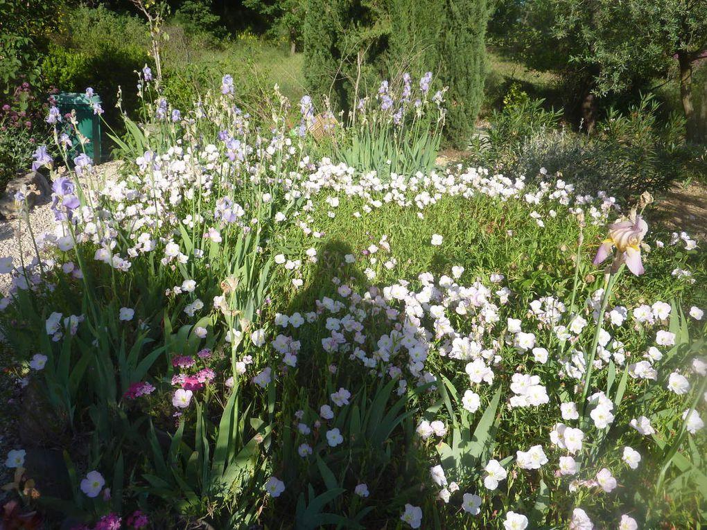 The flores der garden et en prime quelques photos de calanques marseillaises