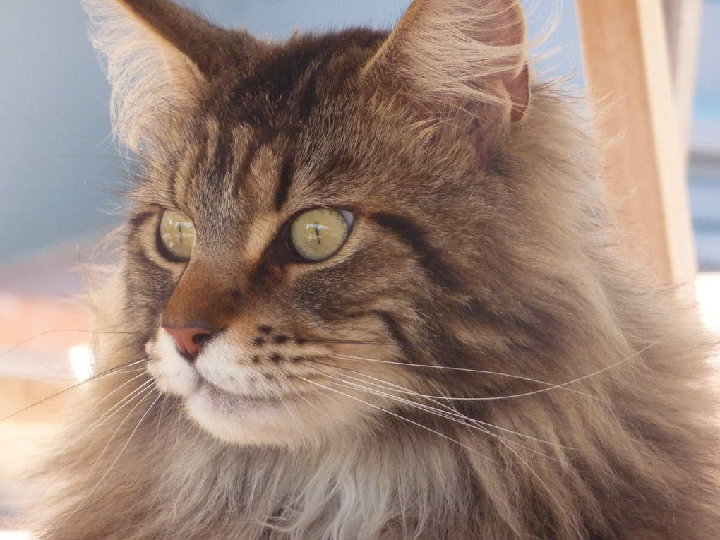 Mon chat et la ronronthérapie