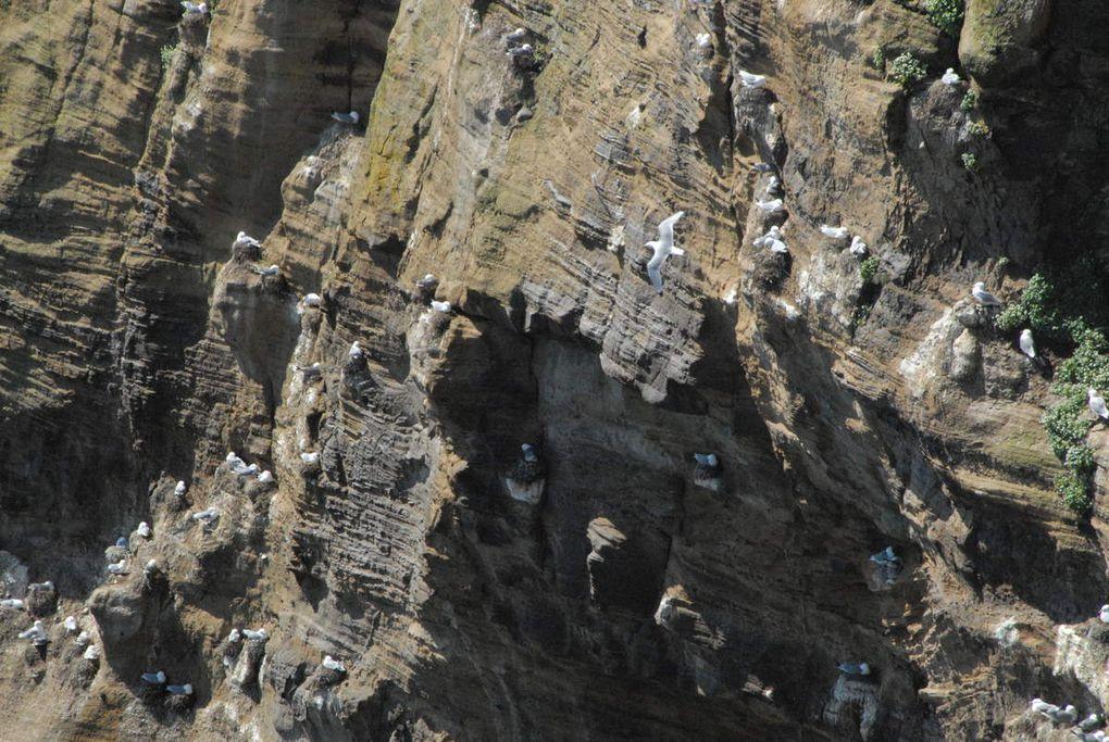 Mais l'élément mineral sous forme de montagnes de cailloux, de sable noir au bord  de la mer, de colonnes balsamiques donne aussi à l'Islande la spécificité de beaucoup de ses paysages. Sur des Km et des Km on ne trouve que des cailloux épars couverts le plus souvent d'une sorte de mousse verte.