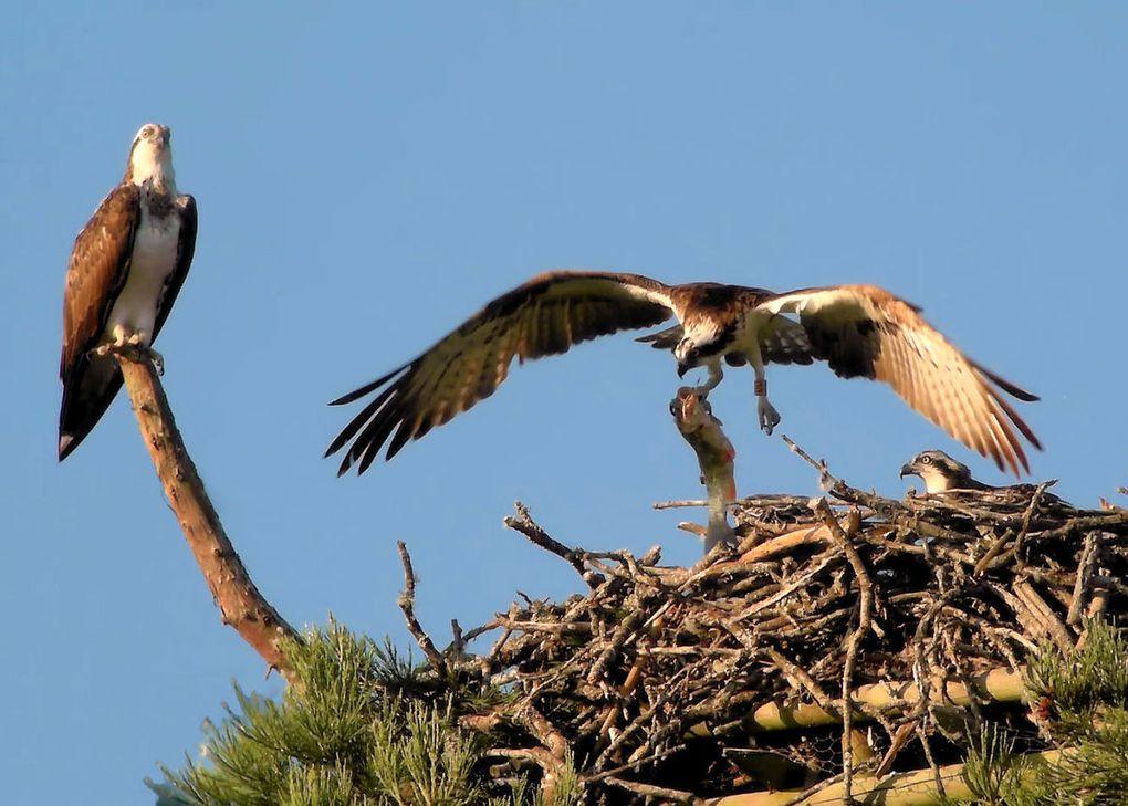 Balbu-infos N°4 : Deux nouveaux jeunes dans le vent