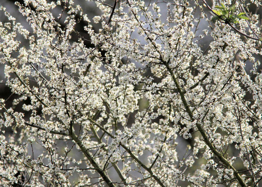 Le printemps impressionniste