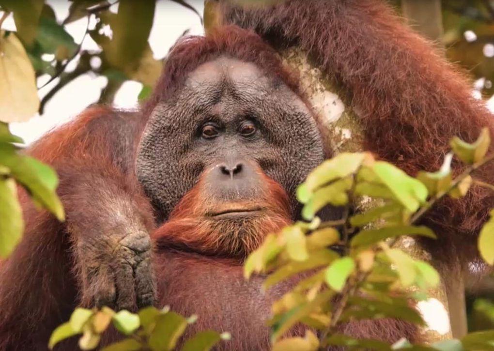 Echappée exotique : Kinabatangan, le fleuve prodige de Bornéo