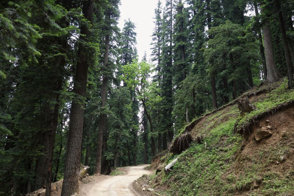 Mussoorie et Chanshal Pass: un week-end, deux ascensions, et un road trip