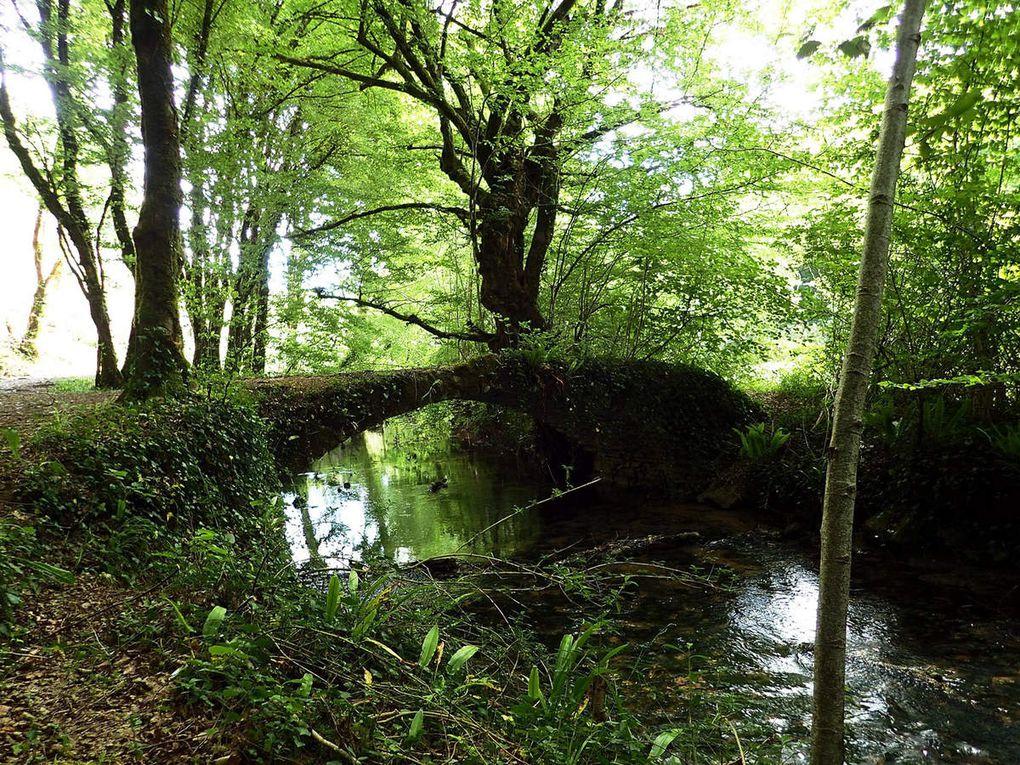 forêts corréziennes