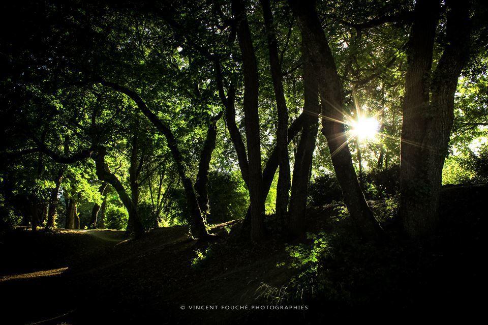 Magnifiques photos de Vincent FOUCHE