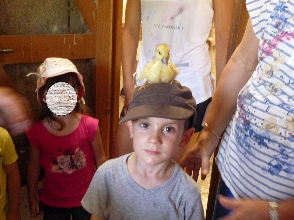 Sortie à la ferme de Prignolles le 20 juin 2017 pour la classe maternelle