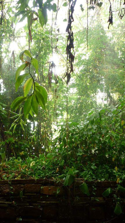 Médiance dans la Rain Forest
