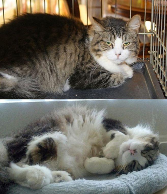 Photos avant/après l'adoption ou ce que l'amour fait aux chats.