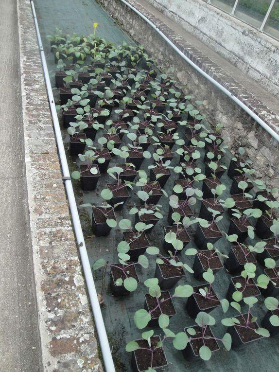 Vous noterez les plants en godets attendant sagement d'être mis en place qu potager.
