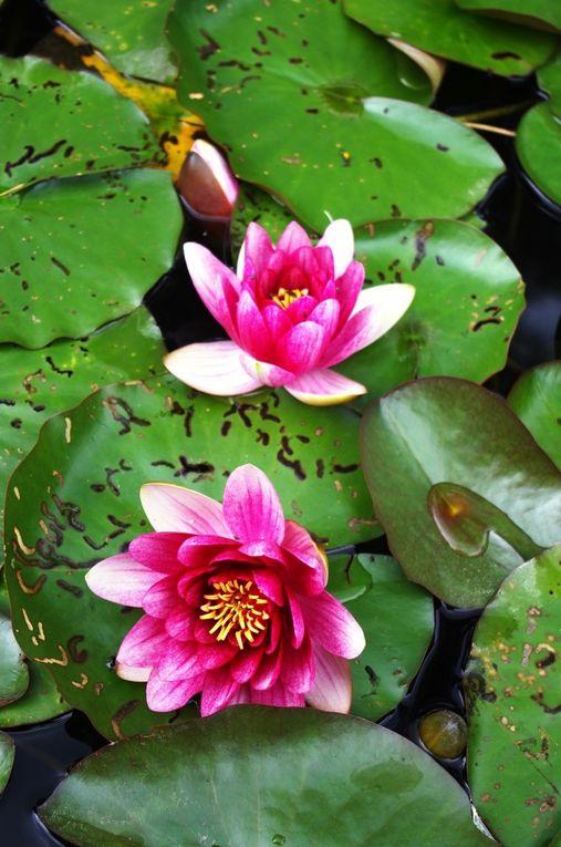 Images du jour dans les jardins Albert Kahn