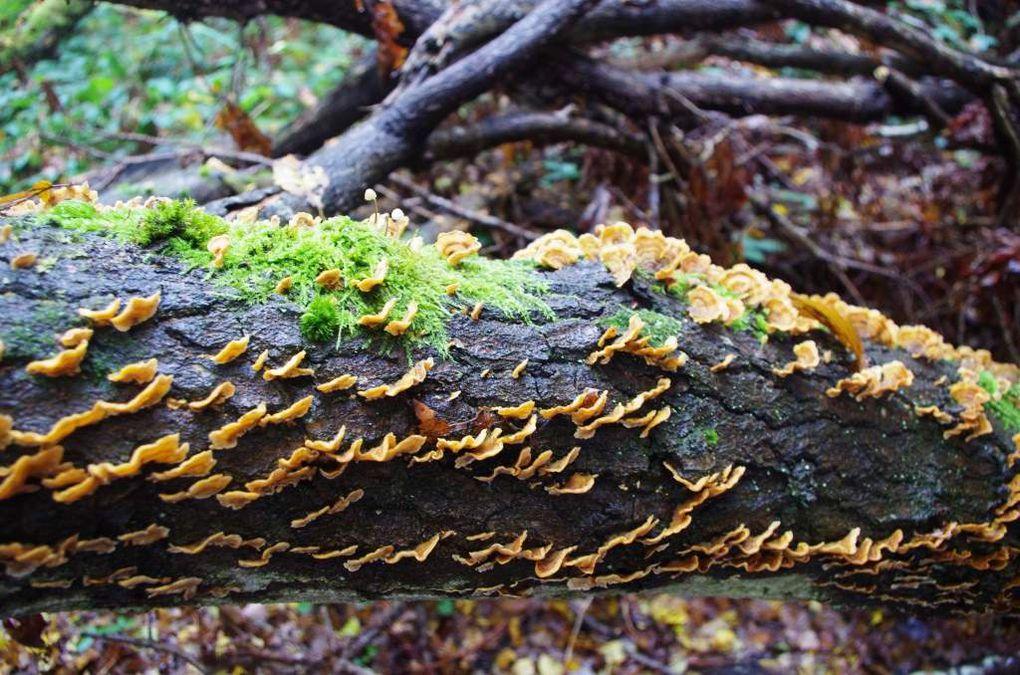 La belle variété des champignons observés durant cette journée