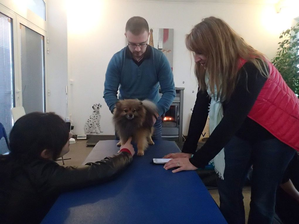 FORMATIONS EN PHYSIOTHERAPIE VETERINAIRE