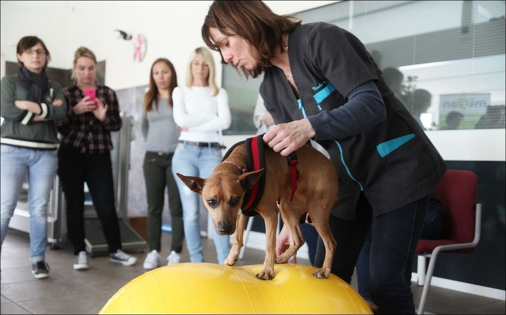 FORMATION PHYSIOTHERAPIE VETERINAIRE POUR ASV