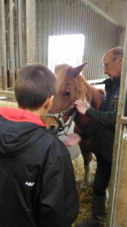 Centre Equestre (3)