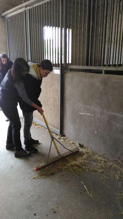 Centre Equestre (4)