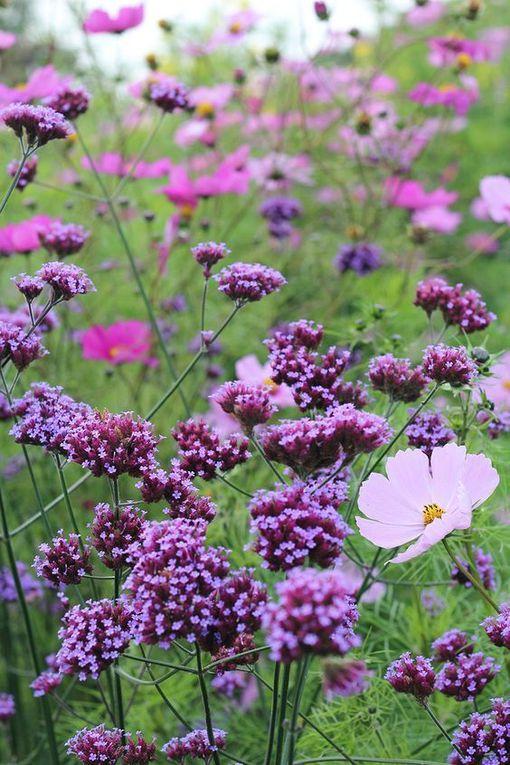 C'est un jardin ...extraordinaire