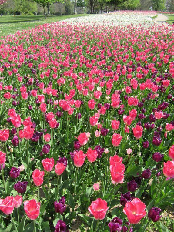 Jardins de Chaumont, Chenonceaux, le Clos Lucé, Cheverny ... hommage au Printemps !