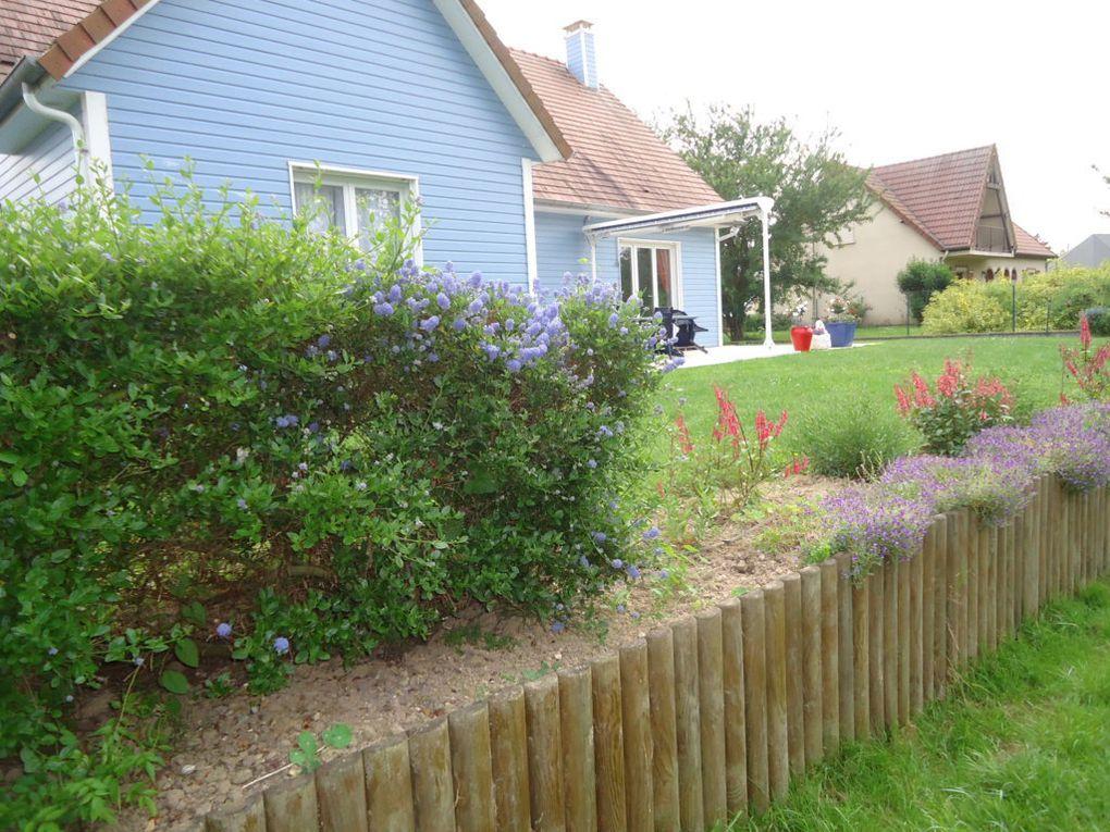fleurs bleues ou roses...dont on cherche le nom...