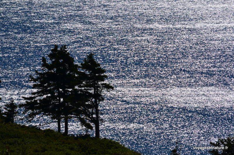 Le Cap-Gaspé et le parc national du Forillon