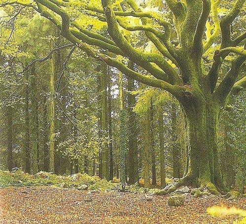 * Forêt