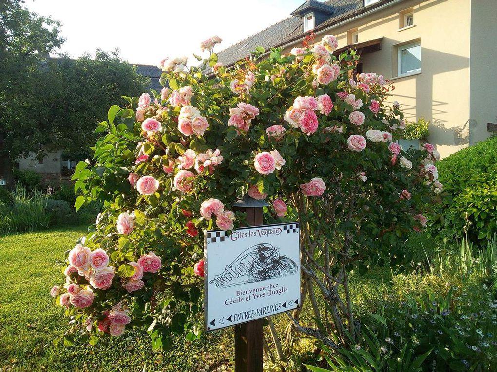 Quelques fleurs du jardin pour toutes les mamans !!!